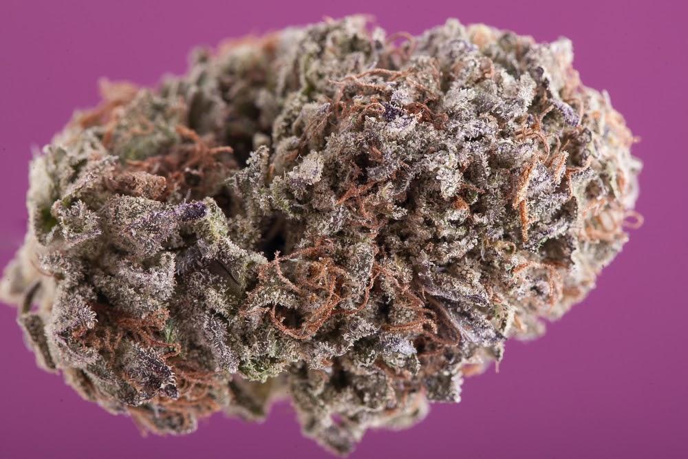 purple kush strain